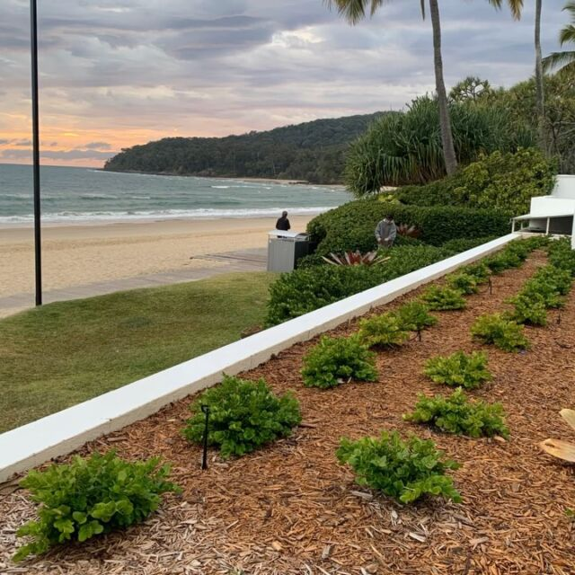 Happy Friday. A beautiful start to the morning at our Noosa main beach maintenance project.