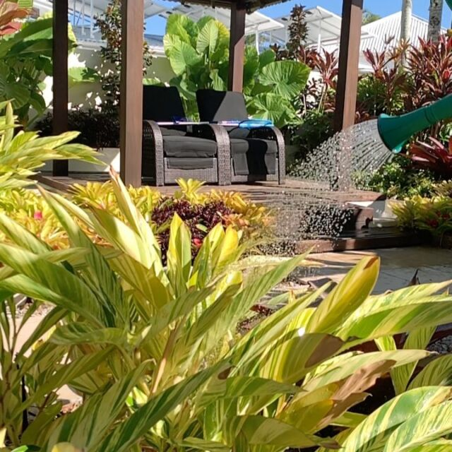 Beautiful foliage display in this lush tropical garden.
