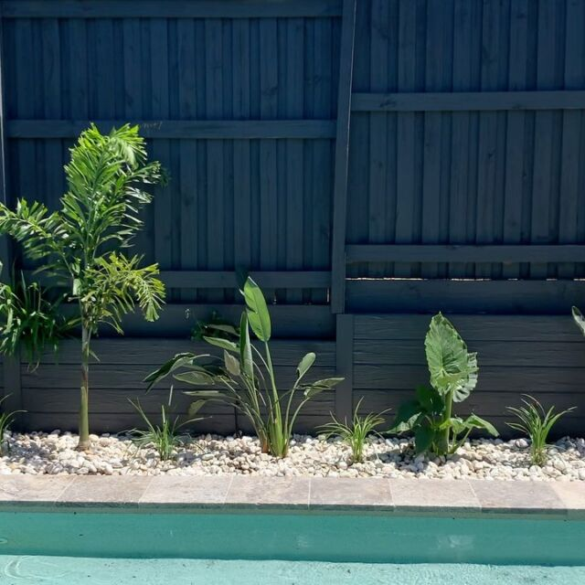 Poolside garden restoration looks fantastic at our latest Peregian springs project.